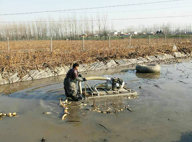 浅水藕种植技术